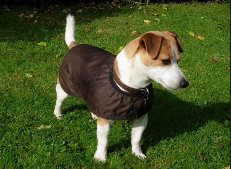The Dog Coats and Dog Jackets to Keep Your Pet Warm