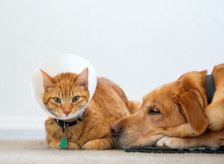 You Can Choose the Best Pet Insurance Decisions